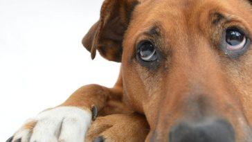 Dejar mi herencia a mi perro